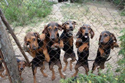 PROMJENA PLANA Azil za pse sele na Manjaču