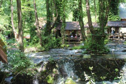 Prvo prirodno dobro iz BiH: Prašuma Janj uvrštena u UNESCO listu svjetskih baština