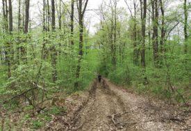 Tragedija u šumi: Muškarac poginuo prilikom sječe drva
