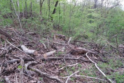 TRAGEDIJA KOD ŠIPOVA Drvosječa nastradao u šumi