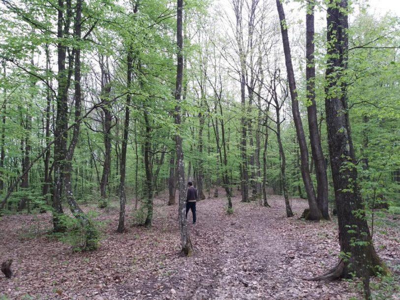 MUŠKARAC TEŠKO POVRIJEĐEN: Spasen biciklista koji se survao u nepristupačan dio šume u Fruškoj gori