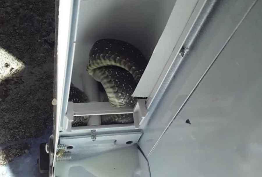 NIKO NE ZNA KAKO JE TAMO DOSPJELA! Žena iz Trebinja u frižideru našla zmiju dugu metar i po