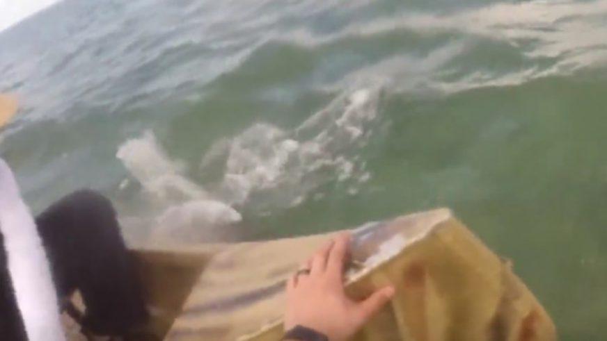 LOV ŽIVOTA Ajkula napala ribare u čamcima, jedva izvukli živu glavu (VIDEO)