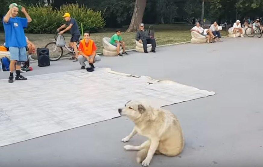 Dječaci su igrali brejkdens na ulici, ali kada je PAS ZAPLESAO oteo im je svu slavu (VIDEO)