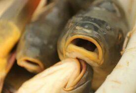 """""""INAČE POJEDE SVE CIMERE"""" Upoznajte Mika, najdepresivniju ribu na svijetu (VIDEO)"""