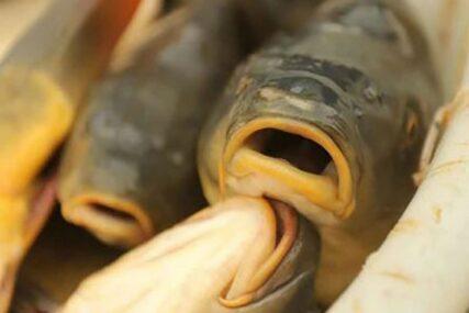 Riba nema pozitivan uticaj na raspoloženje kod muškaraca, kod žena je reakcija suprotna