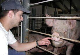 Inspektori pretresaju stočne pijace u Lijevču: Visoke kazne za ILEGALNU TRGOVINU svinjama