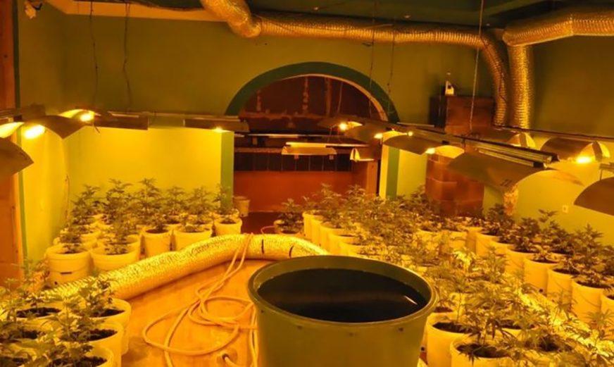 KOMPLETNA OPREMA I SADNICE Policija otkrila laboratoriju za uzgoj marihuane