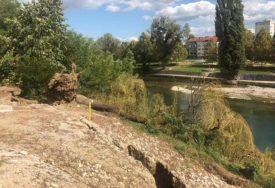 HRAST NIJE IZDRŽAO Dok se čeka sanacija, klizište uz Vrbas srušilo stablo (VIDEO, FOTO)