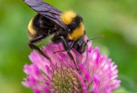 KLIMATSKE PROMJENE DONOSE NEVOLJE Poslije pčela, i njima PRIJETI IZUMIRANJE a krivac je ČOVJEK