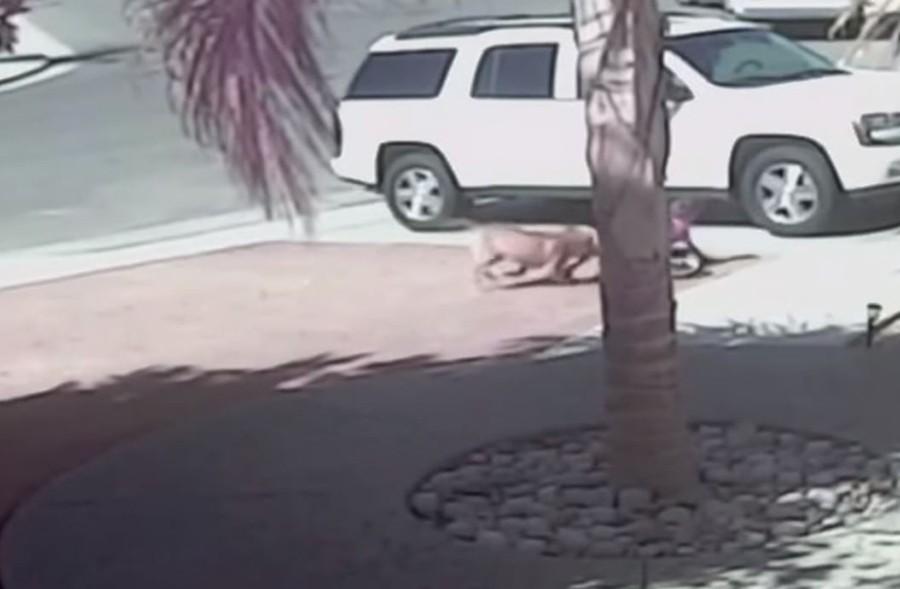 MAČKA ČUVAR Hrabra maca spasila dječaka od napada psa (VIDEO)