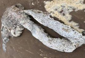 MISTERIOZNO I JEZIVO OTKRIĆE Čudno morsko stvorenje izbezumilo stanovnike