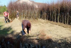 ZA ZELENIJU BUDUĆNOST Na Poniru sade čak 625 stabala