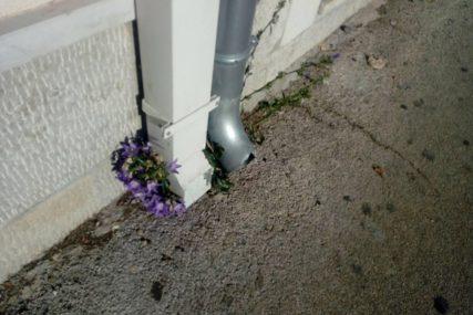 ZBUNILA SE I PRIRODA Umjesto suvog lišća u oktobru cvjeta cvijeće (FOTO)