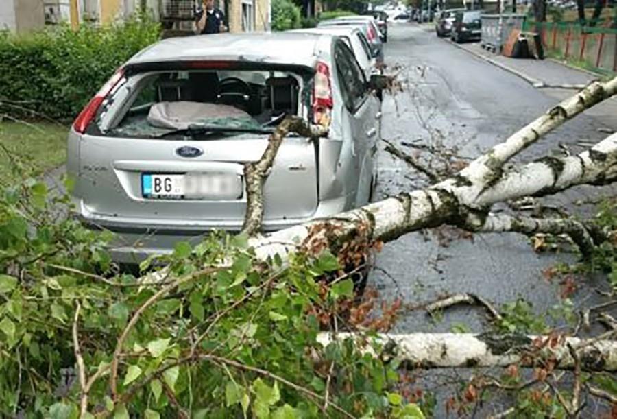 DRAMA U BEOGRADU Drvo palo na auto u pokretu, POVRIJEĐENI MAJKA I SIN