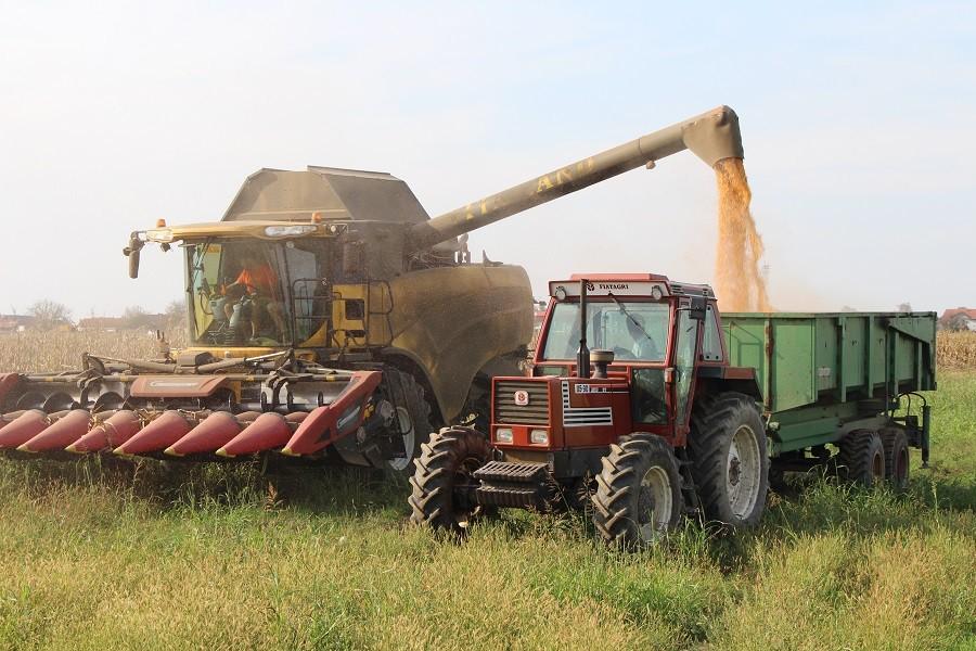 PROSJEČAN ROD Pri kraju berba kukuruza u Kozarskoj Dubici