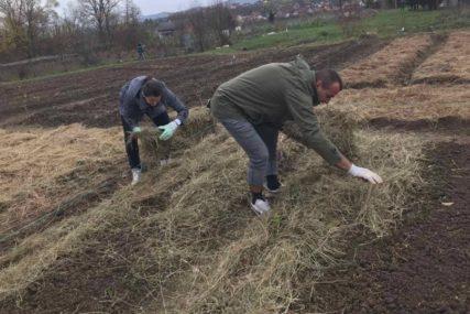 Mladi agronomi ODUŠEVLJENI vraćanjem baštovanstvu: Domaćom hranom protiv GLADI I BOLESTI