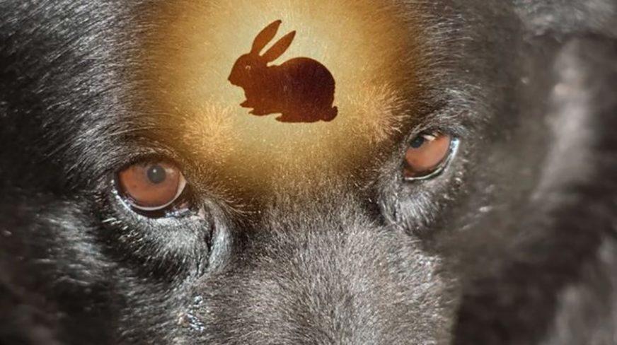 NEVJEROVATNO Pronašao je svog psa sa zecom u ustima, a zbog onoga što je uradio SMIJU MU SE SVI