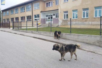 DRAMA NA PUTU DO ŠKOLE Psi lutalice napali i za noge ugrizli dva učenika