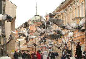 GOLUBOVI NA TRGU KRAJINE Gdje se oni pojave nema negativne energije (FOTO)