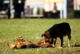 BANJALUKA DOBIJA PRVU PRAONICU ZA PSE Lijepa vijest za vlasnike kućnih ljubimaca (FOTO)