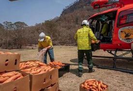 POMOĆ PREŽIVJELIMA Australijanci iz aviona izbacuju mrkvu za ISCRPLJENE ŽIVOTINJE (FOTO)