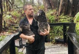PONOVO UGROŽENE Nakon katastrofalnih požara, koalama u Australiji PRIJETE I POPLAVE