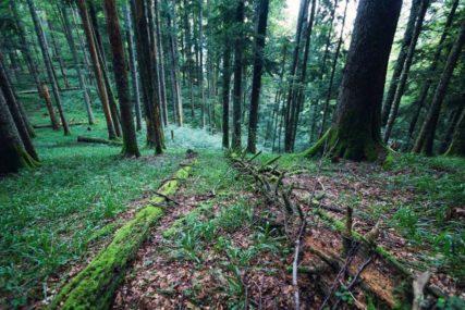 """NEDOSTAJU SJEKAČI Uprkos dobrom uzgoju šuma ŠG """"Drina"""" nije ostvarilo plan proizvodnje"""