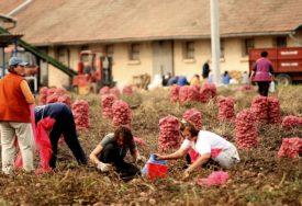 POLJOPRIVREDNICI POŽURILI PO KROMPIR Trebinjci kupuju sjeme iz Holandije