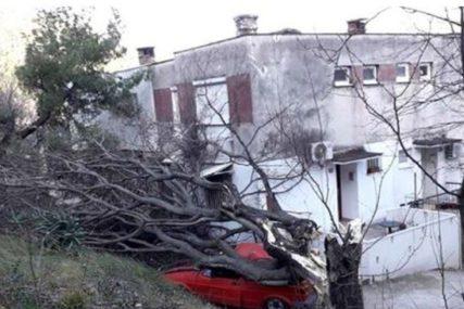STANARI ZAROBLJENI U ZGRADI Vjetar oborio stablo ispred ulaza