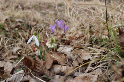 ŠUMSKO ZELENILO SE POLAKO BUDI Vjesnici proljeća ukrasili šume u okolini Dervente (FOTO)
