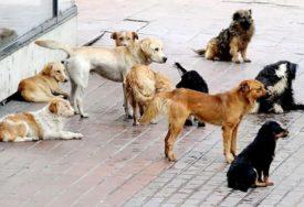 NOVO ISTRAŽIVANJE NAUČNIKA Obučeni psi u 94 odsto slučajeva nanjuše zaraženu osobu
