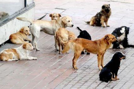 BUKTINJA PRIJETILA DA UGROZI ŽIVOTINJE Vatrogasci od vatre spasili azil za napuštene pse