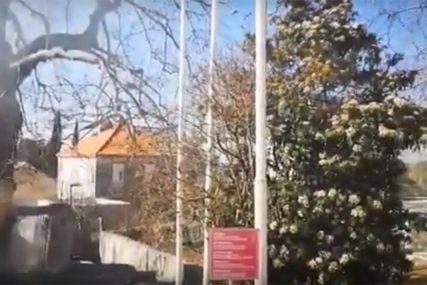 Planulo drvo STARO 500 GODINA: Bilo je kandidat za evropsko STABLO GODINE (VIDEO)