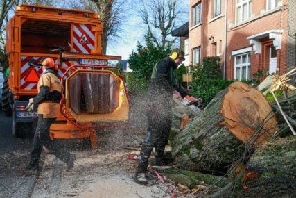 POMEN ZA DRVO Oluja srušila drvo staro 150 godina