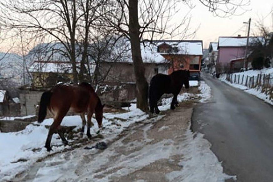 DOBILI SMJEŠTAJ, HRANU I NJEGU Inspektori se pobrinuli za konje koji su lutali Sarajevom