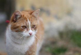 Mačka ostala zaglavljena: Muškarac pozvao majstore da poprave kadu, šokirao se kad je shvatio šta su napravili (VIDEO)