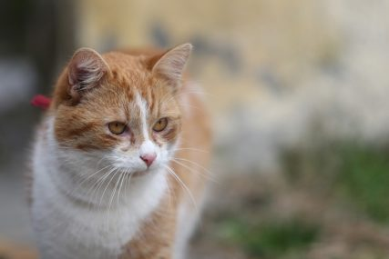 Porodica skrhana bolom: Mačak uginuo nakon što je odbranio mališane OD ZMIJE OTROVNICE