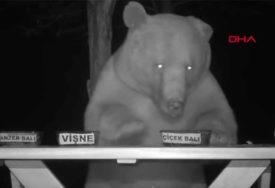 NADMUDRIO GLADNE ŽIVOTINJE Medvjedi su mu krali med, a onda je smislio GENIJALNU IDEJU (FOTO)