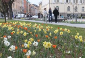 Pripremite vaše balkone i bašte za proljeće: Pet vrsta cvijeća koje uvijek uspijeva (FOTO)