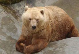DA LI SU OTROVANI? Više leševa medvjeda pronađeno na području Kotor Varoša(FOTO)