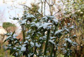 U SLOVENIJI PAO SNIJEG Pahulje stigle sa prvim danima decembra