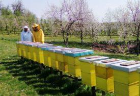Pčelari u Potkozarju ZADOVOLJNI: Toplo vrijeme i puno cvijeta obećava DOBRU SEZONU
