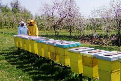 VELIKA POTRAŽNJA Srbija izvezla 2.701 tonu meda, vrijednost veća od 13 miliona evra