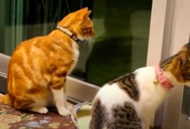 DELOŽACIJA OTKRILA NJEGOVU TAJNU Muškarac u stanu držao 110 mačaka