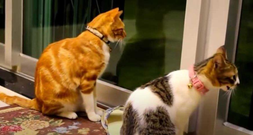 Prepoznatljive po repu: Divlje mačke se vratile u šume poslije vijekova