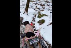 PRUŽILA IM DOM Žena usvojila šest pasa sa POSEBNIM POTREBAMA, a razlog je PREDIVAN (VIDEO)