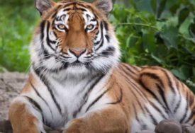 Svi imaju samo JEDAN SIMPTOM: Osam divljih životinja ZARAŽENO KORONOM u zoološkom vrtu