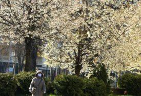 POLEN VEĆ U VAZDUHU Mart i april rizični za alergične