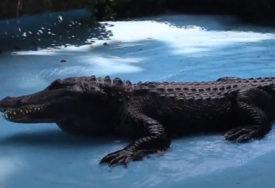 """""""Ima posebno velike zube"""" Pronađena lobanje izumrle vrste krokodila u Australiji"""
